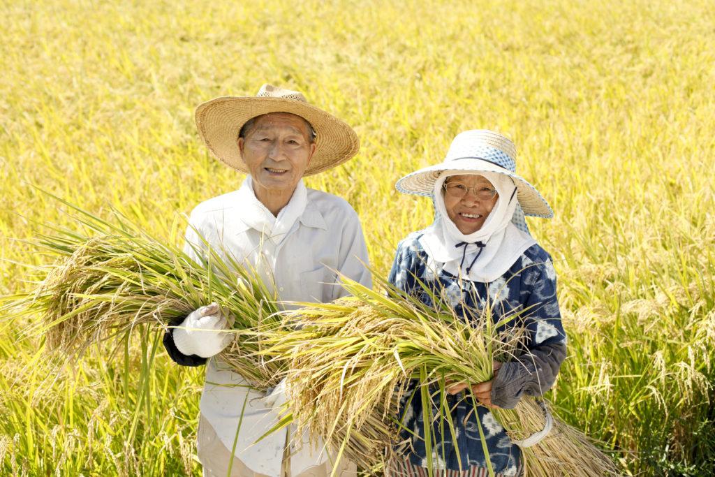 shutterstock 175873031 1024x683 - 農業の後継者不足について 農業参入のすすめ